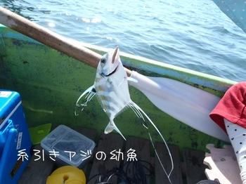 2013_10130691a.JPG